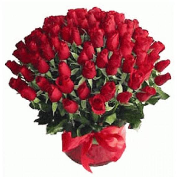 53 Trandafiri