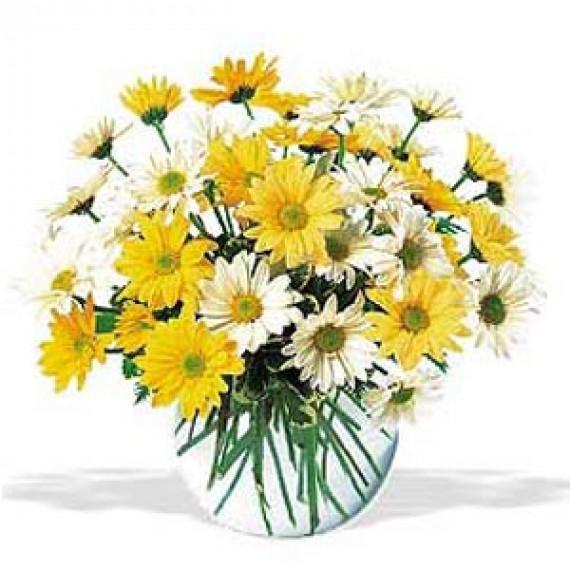 Amestec de Crizanteme