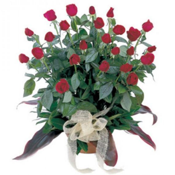 29 Trandafiri