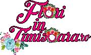 Flori in Timisoara